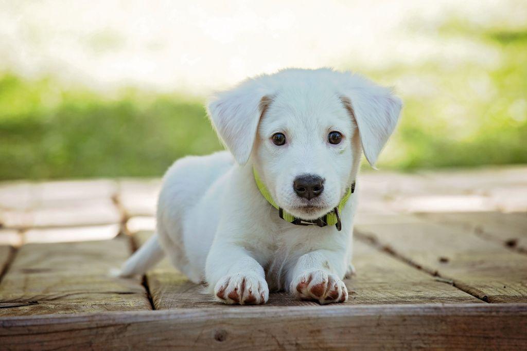 Hunde-DNA-Test